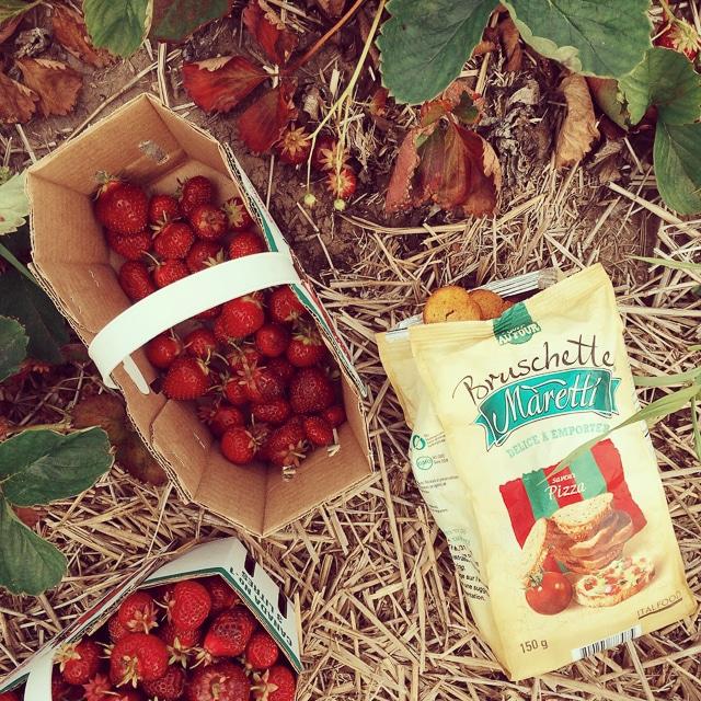 Maretti strawberry picking