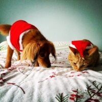 Jynx and Ziggy at Christmas