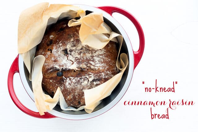 no-knead raisin bread wrapped in parchment paper baked in a red Dutch oven